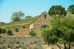 País vinícola de California Imagen de archivo
