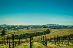 País vinícola de California Fotografía de archivo libre de regalías