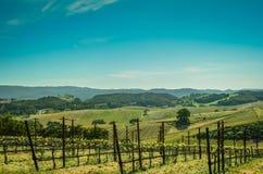 País vinícola de California Imagenes de archivo