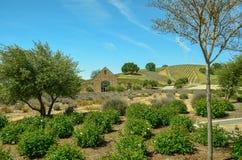 País vinícola de California Fotografía de archivo