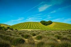 País vinícola de California Imagen de archivo libre de regalías