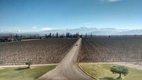 País vinícola de Mendoza la Argentina Imágenes de archivo libres de regalías