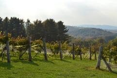 País vinícola de Nueva Inglaterra Foto de archivo