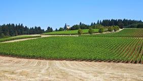 País vinícola de Oregon Imagen de archivo libre de regalías