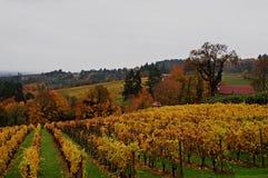 País vinícola de Oregon en otoño Fotografía de archivo libre de regalías