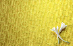 Paño con las flores Fotos de archivo libres de regalías