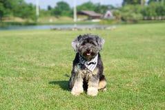Pañuelo que lleva del perro mezclado de la raza que se sienta en la hierba al aire libre foto de archivo libre de regalías