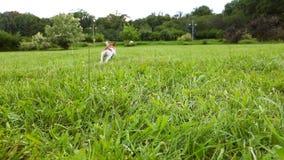 Pañuelo rojo del perro del terrier activo de Jack Russell que juega con la pelota de tenis en la hierba verde Imágenes de vídeo S metrajes