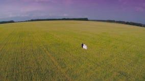 Państwo młodzi iść przez zielonego pszenicznego pola widok z lotu ptaka Odgórny widok zbiory wideo