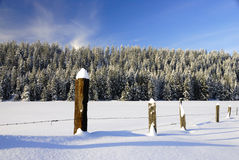 paśnik śnieżny Zdjęcie Royalty Free