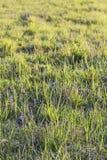 Paśnik Imbued Z światłem słonecznym Zdjęcie Stock