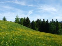 Paśniki i wzgórza Herisau obraz stock