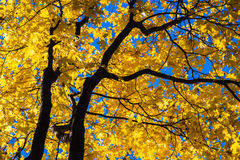 Październików błękity 7 Obrazy Royalty Free