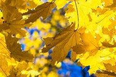 Październików błękity 11 Zdjęcie Royalty Free