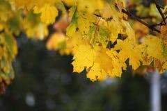 Październik jesień 01 Obraz Royalty Free