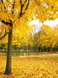 październik park fotografia royalty free