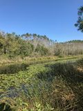 PAŹDZIERNIK 2018, Turcja bagna po drugie duży słodkowodny las: Acarlar w Sakarya, Turcja obraz stock