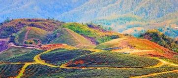 PA collina Sa Lao Cai Vietnam Immagine Stock