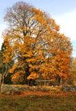 październik drzewo s Fotografia Royalty Free