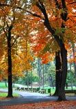 Październik jesieni drzewo Zdjęcie Royalty Free