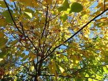 Października Jesienny drzewo Obrazy Royalty Free