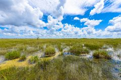 Pa-Hay-Okee Lookout Tower and trail of the Everglades National Park. Boardwalks in the swamp. Florida, USA royalty free stock image