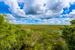 Pa-Hay-Okee Lookout Tower and trail of the Everglades National Park. Boardwalks in the swamp. Florida, USA royalty free stock photos