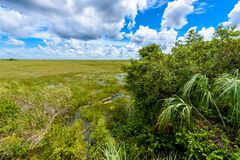 Pa-Hay-Okee Lookout Tower and trail of the Everglades National Park. Boardwalks in the swamp. Florida, USA stock images