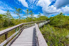 Pa-Hay-Okee Lookout Tower and trail of the Everglades National Park. Boardwalks in the swamp. Florida, USA stock photography
