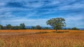 PA jesieni pole zdjęcie royalty free
