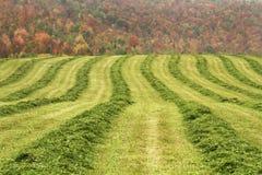 Paśnik havest w jesieni Fotografia Stock