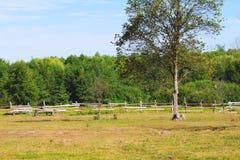 Paśnik na gospodarstwie rolnym Fotografia Royalty Free