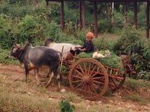 Pa-o stamvrouw, Myanmar Stock Afbeelding