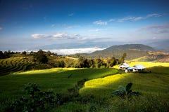 PA Pong Piang Rice Terraces Fotografering för Bildbyråer