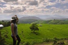 Pa Pong Piang Rice Terraces Royalty Free Stock Image