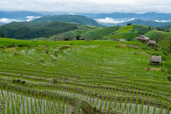 PA Pong Piang Rice Terraces, Nord von Thailand stockfoto