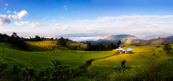 Pa Pong Piang Rice Terraces Stock Photo