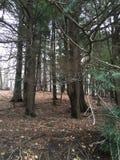 PA-skog Royaltyfri Bild