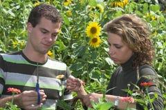 Paar dat in de tuin samenwerkt Stock Fotografie