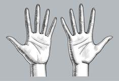 Paar der Frau übergibt Palme oben mit den offenen Fingern Vektor Abbildung