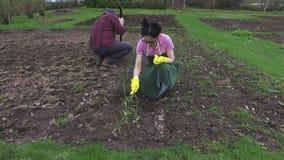 Paar die aan gebied in tuin werken stock footage