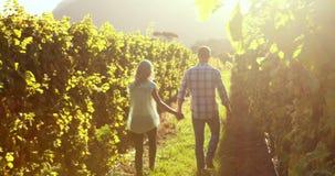 Paar die hand in hand tussen wijnstok lopen stock footage