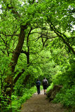 Paar die in het bos lopen Stock Foto's
