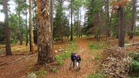 Paar die in het bos wandelen stock video