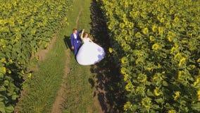 Paar die in liefde naast zonnebloemgebied lopen op de zomerdag Luchtlengte stock footage