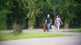 Paar die met huisdieren in park lopen - de man en de vrouw lopen met Ierse zetter en schor stock video