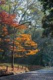 Paar die op de weg in het park in de herfst met rode esdoorn lopen Royalty-vrije Stock Fotografie