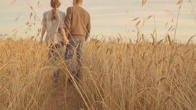 Paar die op een gouden tarwegebied lopen en handen houden bij zonsondergang Langzame Motie stock videobeelden