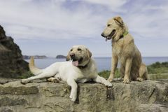 Paar die van honden met een mooi landschap zitten stock foto