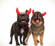 Paar die van leuke duivelshonden Halloween samen vieren stock foto's